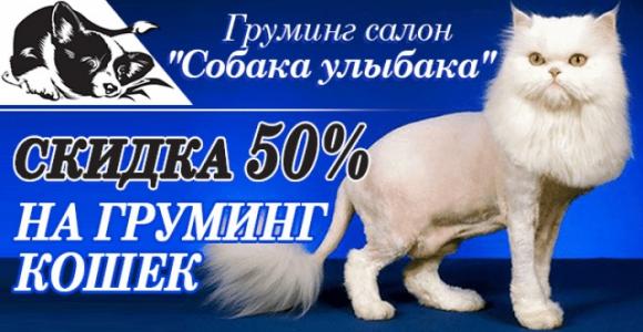 Скидка 50% на стрижку кошек и котов от груминг-салона
