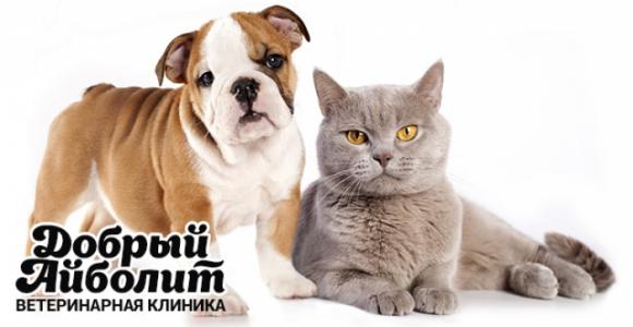 Скидка 50% на кастрацию и стерилизацию кошек и собак в клинике