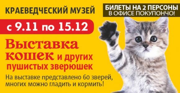 Скидка 50% на билет на 2 персоны на Выставку кошек