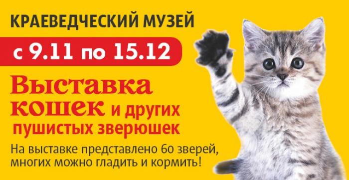 Скидка 50% на билет на 2 персоны на Выставку кошек и других пушистиков