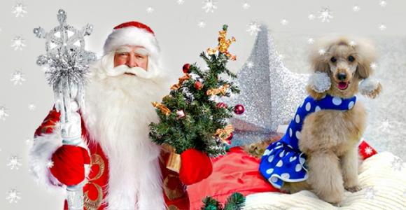 Скидка 50% на поздравление Деда Мороза с дрессированным пуделем