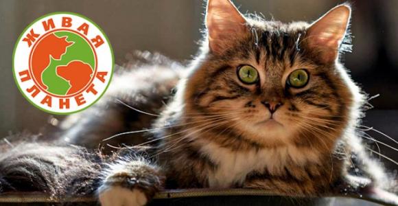 Скидка 50% на стерилизацию кошек в зоомагазине