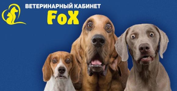 Скидка 50% на кастрацию и стерилизацию собак в клинике FOX