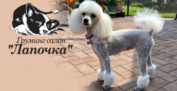 Скидка 50% на летнюю стрижку собак от груминг-салона