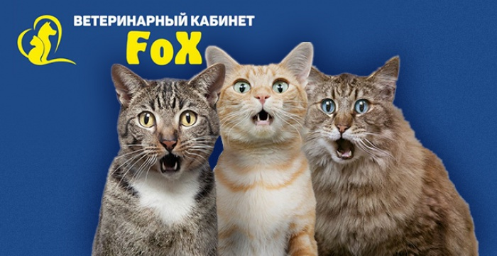 Скидка 50% на кастрацию котов и стерилизацию кошек в клинике FOX