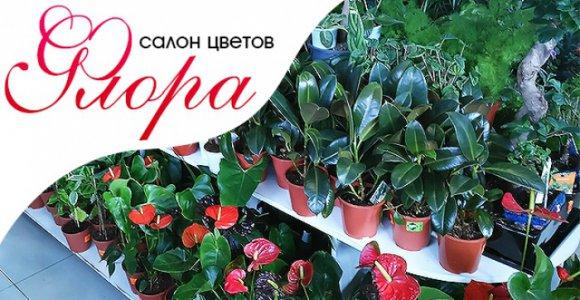 Любые горшечные растения в салоне цветов