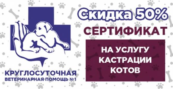 Скидка 50% на кастрацию кота в ветеринарной клинике КОООЗЖ