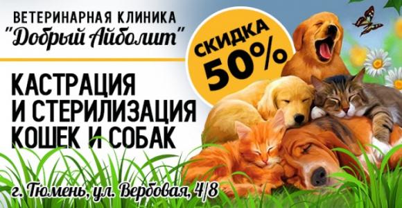 Скидка 50% на кастрацию и стерилизацию кошек и собак в клинике Добрый Айболит